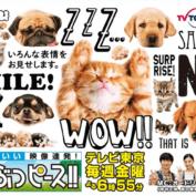 どうぶつピース / Urocze Zwierzaki (TV Tokyo)