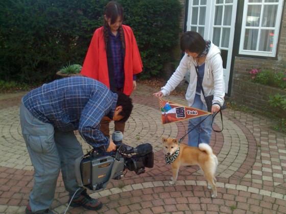 欧州の日本犬/ Psy ras japońskich (TV Tokyo)